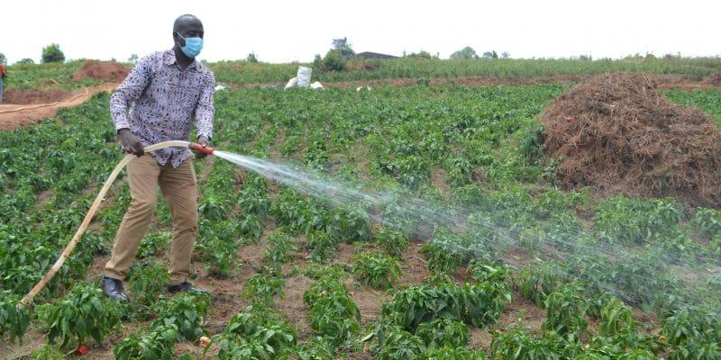 RWANDA : de nouvelles pompes solaires pour irriguer 10 hectares de plantation à Ngoma©Rwarri