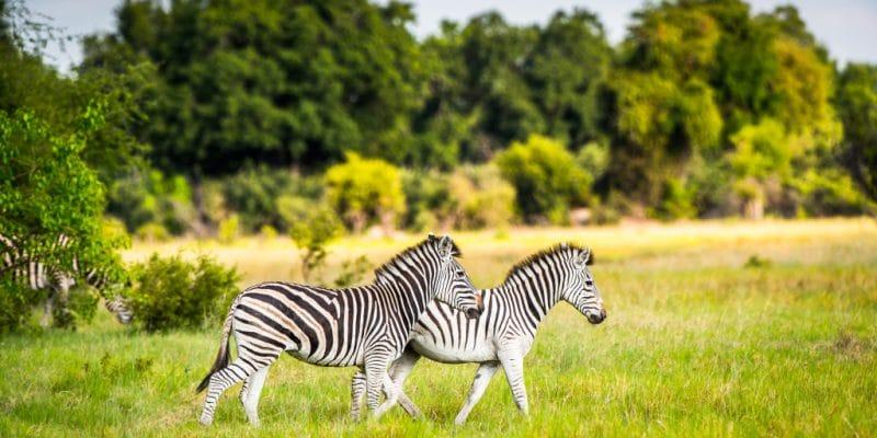 AFRICA: Walton Foundation commits $100m to wildlife conservation © Anton_Ivanov/Shutterstock