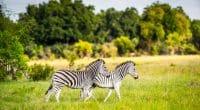 AFRIQUE : la Fondation Walton engage 100 M$ pour la conservation de la faune sauvage © Anton_Ivanov/Shutterstock