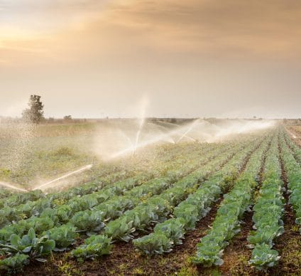 NIGERIA: FEC Releases Funds for Rima Valley Irrigation©Fotokostic/Shutterstock