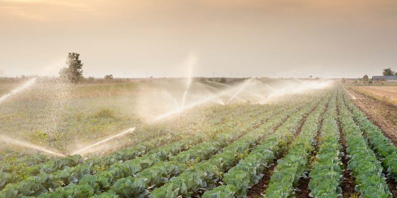NIGERIA : la FEC débloque des fonds pour l'irrigation dans la vallée de Rima©Fotokostic/Shutterstock