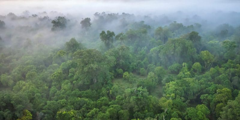 WEST AFRICA: Call for applications for the sustainable management of Guinean forests©CherylRamalho/Shutterstock