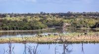 RWANDA : le projet Lafrec s'achève après avoir restauré 603 hectares de forêts©PACO COMO/Shutterstock
