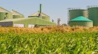 MAROC : Rabat veut augmenter la part de la biomasse dans son mix électrique©ShDrohnenFly/Shutterstock