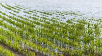 CAMEROON: Rainfall variability threatens food security©Lisa-S/Shutterstock