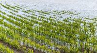 CAMEROUN : la variabilité de la pluviométrie menace la sécurité alimentaire ©Lisa-S/Shutterstock