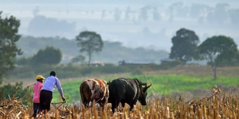 KENYA: Homa Bay to harvest rainwater for arable irrigation ©Belikova Oksana/Shutterstock