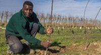 NIGERIA : l'État de Kano lance une campagne de reboisement d'un million d'arbres©ancoay/Shutterstock