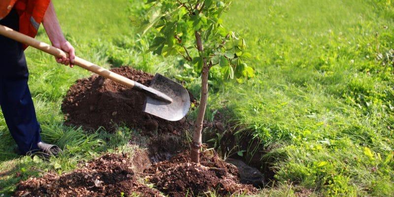 BURKINA FASO : le réseau des parlementaires sur l'environnent plante 300 arbres à Lao©Guas/Shutterstock