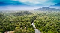 COMIFAC: Member States harmonize protected area management policies©Gustavo Frazao/Shutterstock