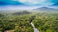 COMIFAC : les États membres harmonisent les politiques de gestion des aires protégées©Gustavo Frazao/Shutterstock