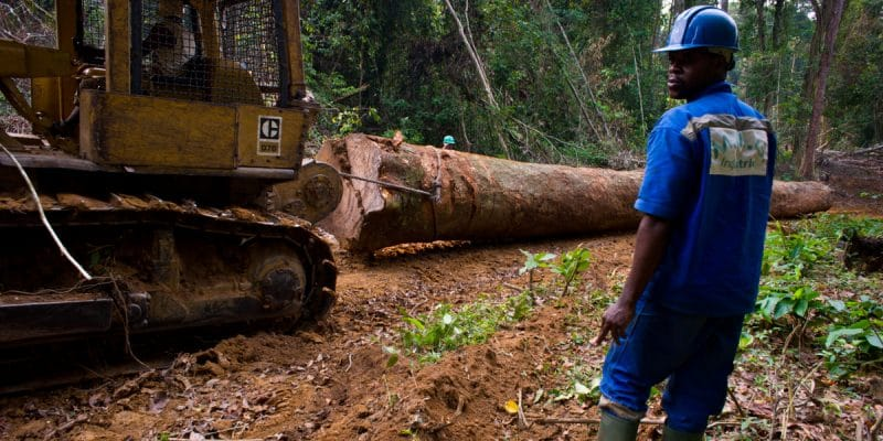 AFRICA: Creation of a business forum for sustainable forestry©TOWANDA1961/Shutterstock