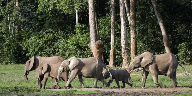 AFRIQUE: la BAD va intégrer le capital naturel dans le financement du développement©Sergey Uryadnikov/Shutterstock