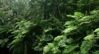 GABON : lancement de l'initiative ForestLAB, pour la surveillance forestière ©Sukma Rizqi/Shutterstock
