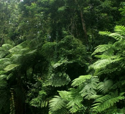 GABON: Launch of ForestLAB initiative for forest monitoring©Sukma Rizqi/Shutterstock