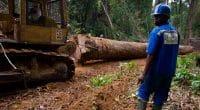 DRC: Suspension of moratorium on new logging concessions causes concern©TOWANDA1961/Shutterstock