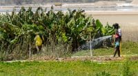 SÉNÉGAL : InfraCo Africa finance les systèmes d'irrigation solaire de Bonergie© Anton_Ivanov/Shutterstock