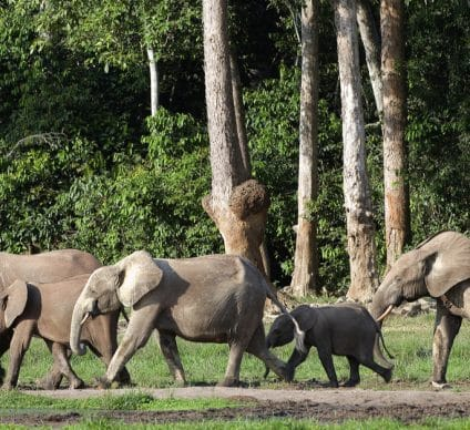 KENYA: Covid causes elephant baby boom, 200 new babies by 2020©Sergey Uryadnikov/Shutterstock