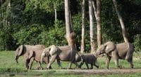 KENYA: la Covid provoque un baby-boom chez les éléphants, 200 nouveaux bébés en 2020©Sergey Uryadnikov/Shutterstock