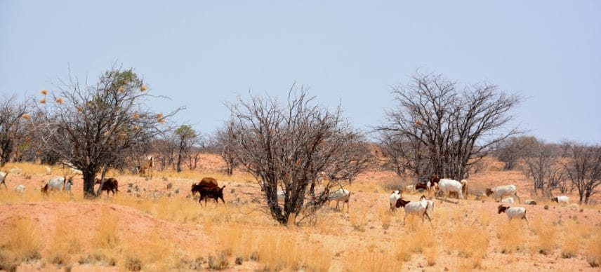 AFRICA: the GCF grants $1.2 billion for climate resilience in several countries © meunierd/Shuttersto