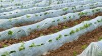 MAROC : AgroTech mise sur la formation pour améliorer la gestion des déchets agricoles©Olaf Speier/Shutterstock