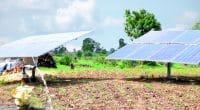 OUGANDA : Nexus Green installera des systèmes d'irrigation solaire sur 687 sites©Abhi photo studio/Shutterstock