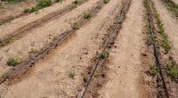 KENYA : à Galole, l'État finance la réalisation de 27 forages pour l'irrigation©Christian Fry/Shutterstock