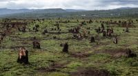 AFRICA: Four million hectares of forest disappear each year©Dudarev Mikhail/Shutterstock