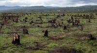 AFRIQUE: quatre millions d'hectares de forêts disparaissent chaque année©Dudarev Mikhail/Shutterstock